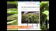 Легализираха марихуаната и еднополовите бракове във Вашингтон