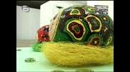 btv - Художничка шари щраусови яйца