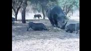 Носорог Размазва Глиган