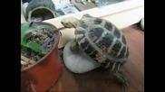 Загоряла костенурка хвърлила мерак на камък