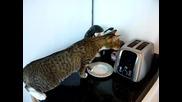 смях..котка срещу тостер ;д