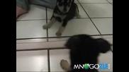 Кученцето и огледалото