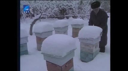 Насаме с пчелите(bg Audio) 12 част