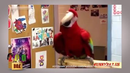 Куфеещи папагали във вихъра на танца :)