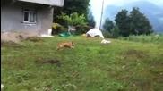 котка се бъзика с куче