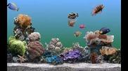 Подводен Свят - Аквариум за декстопа !!!