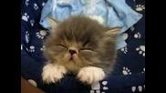 Заспиващо Коте