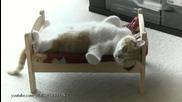 Котето се наигра и реши да си почине