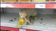 Котка в супермаркет !