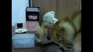 Котка иска помощ от стопанина си