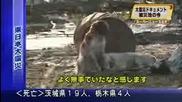 Куче в Япония остава с приятеля си до край