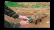 Някъде в Русия... Малко лисиче търси помощ от хора...