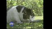 Най - Дебелата Котка