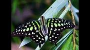Релакс - Пеперуди 01