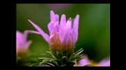 Flowers In Growth (time Lapse) Osho