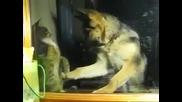 коте и куче си разменят боксови удари