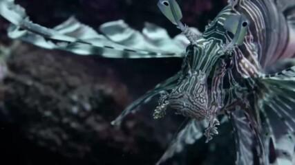 Най-ефективните убийци в рифа | Враждебната планета