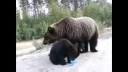 Мечка и Мечета си Хапват Кондензирано Мляко ~ Медведи едят сгущенку