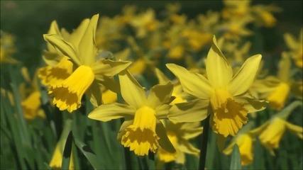 С ухание на пролет