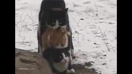 Котета сковани от студа се топлят!