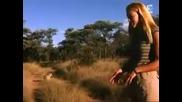 Смела жена срещу гепарди