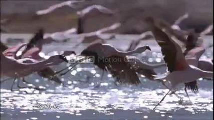 от Андите до Амазонка Hd (bbc Motion Gallery)