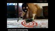 Коте изчезва с финес 6 - Cat gone - Thriller Cat 6 - Магия