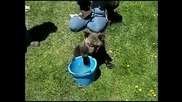 Сладко меченце иска да се къпе :)