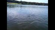 Акула в езеро на голф игрище!