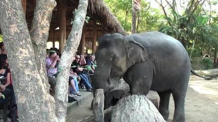! Слон си прави Автопортрет