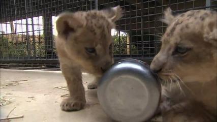 Бебета в зоопарка (Zoo Juniors) S03E03