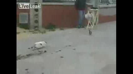 Котка Пропуска Улов и Се Отчайва