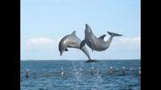 Прекрасни Делфини и китове* Енио Мориконе