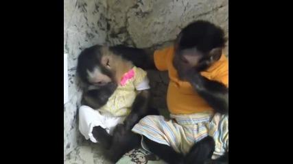 Понякога животните са по - чувствителни от хората