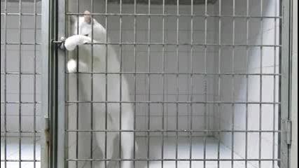 Котката-беглец!