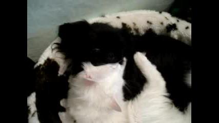 Крис И Пек - Черно Куче И Бяло Коте