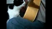 Котката добре се устрои!