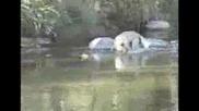 Куче хващта голяма риба