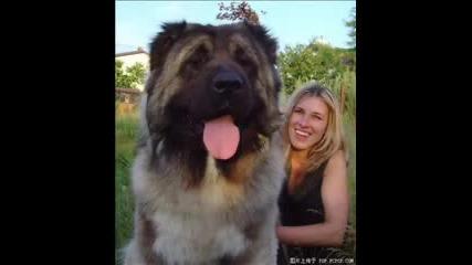 Много Големи Кучета!