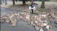 Диви зайчета атакуват момиче