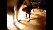 Ето как кучето Мишка реагира когато за пръв път видя Moki !