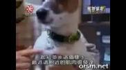 Куче, което прави нещо интересно !