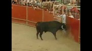 Луд прескача бика и го дразни още повече