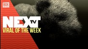 NEXTTV 029: Viral of the Week