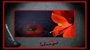 Crvena Jabuka 2010 Noci Su Hladne - Iza Prozora