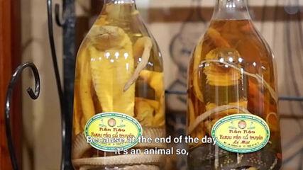 Adventurous bites: Snakes in your wine bottles