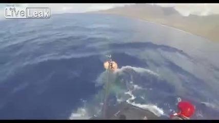 40 - тонен кит се заплита в мрежите на риболовен кораб