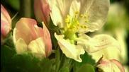 Secret Garden - Cantoluna