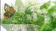 Свежестта на момините сълзи през пролеттта! ... (music Ernesto Cortazar) ... ...