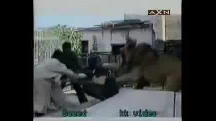 Лъв напада човек